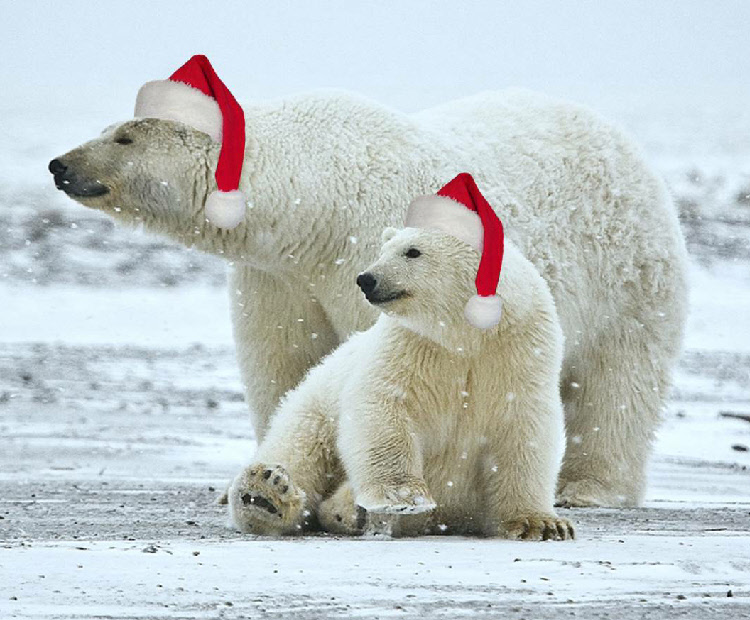 Christmas_Polar_Bears.jpg
